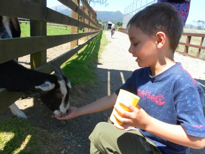 On your way to Pukeiti, call in for a stop over at Puakai Animal Farm. The children love it, especially to see the white tiger. And look at that mountain view!