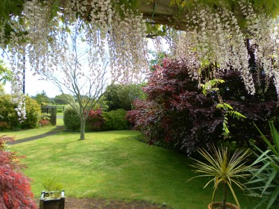 Look at this amazing view! This is what I see from my dining room table when the Wisteria is in flower.